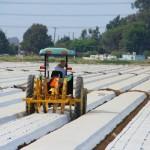 Oxnard - california usa- coltivazioni di fragole