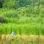 il verde dei campi e gli uomini col macete