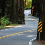 Avenue of the giants- la strada si snoda tra le sequoie