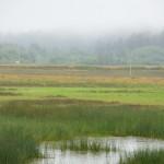 Lagune,prati e boschi avvolti nella nebbia