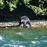 oggi si mangia salmone... Campell River Canada
