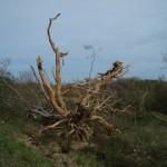 sulla strada da zipolite a puerto escondido - messico - i segni dell'uragano carlotta