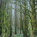 dentro redwood