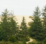 Dune dell'Oregon