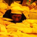 mercado central uyuni