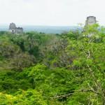 Tikal - guatemala- dall'alto di una piramide in mezzo alla giungla