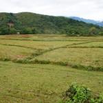 risaia in asciutta dopo il raccolto