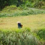 donne al lavoro nelle risaie