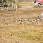 piana delle giare. nei pressi di Phonsavan