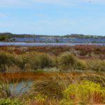 mullet lake reserve